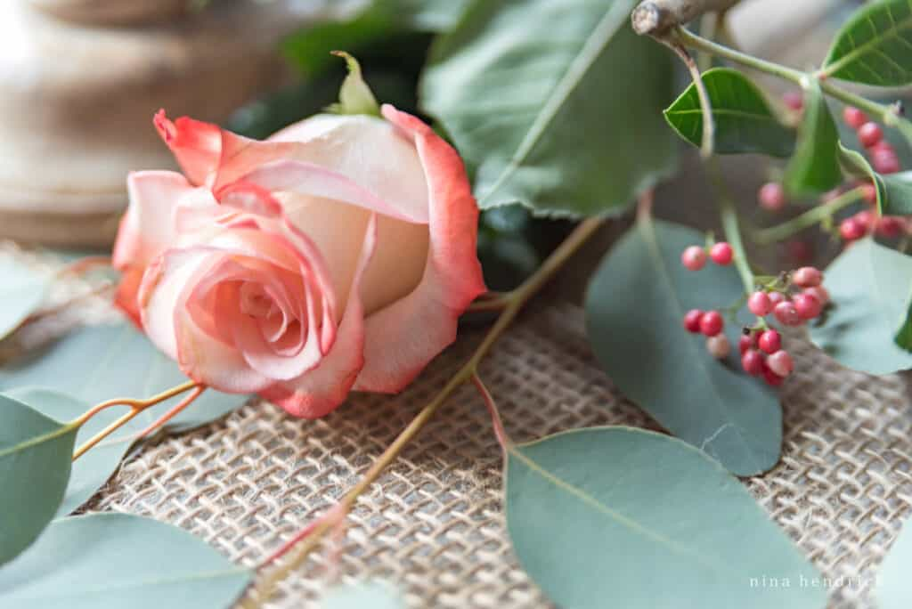 Pink English Roses and seeded eucalyptus on burlap