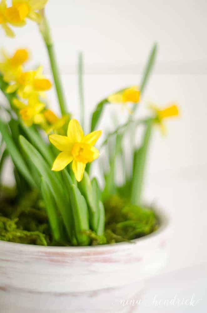 Favorite Spring Things Free Printable & Vignette