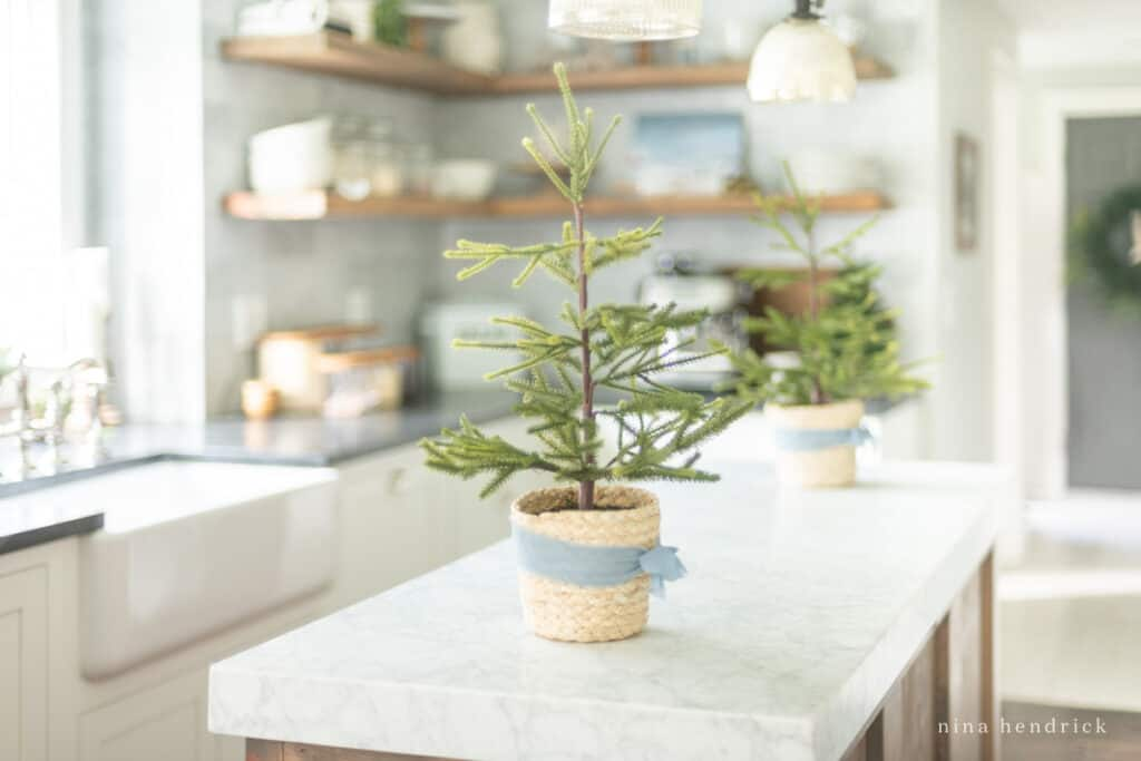 Simple Blue ribbon surrounds small trees used as Christmas kitchen decor