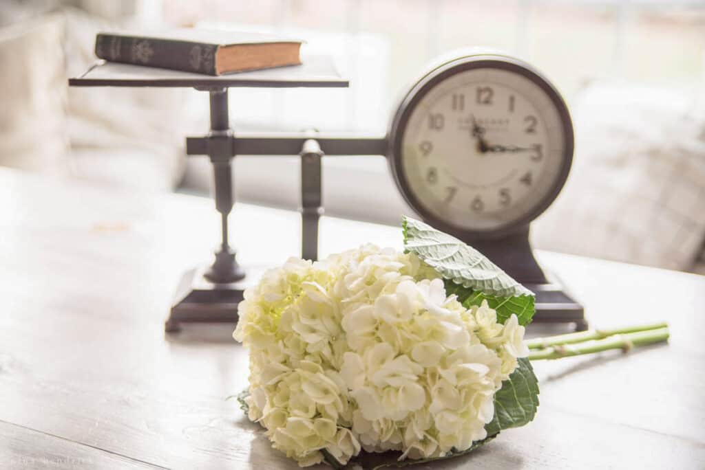 Scale clock and flower on a table